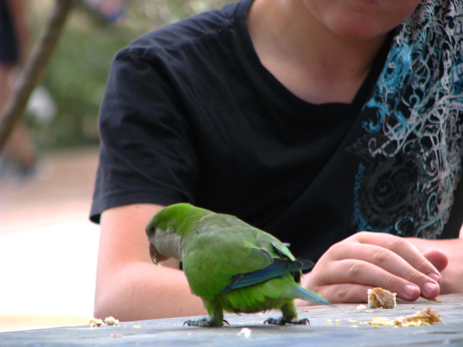 zvědavý papouch