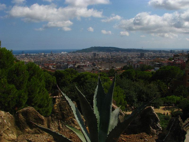pohled na město přes agáve