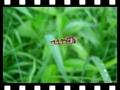 Pestřenka v letu - film