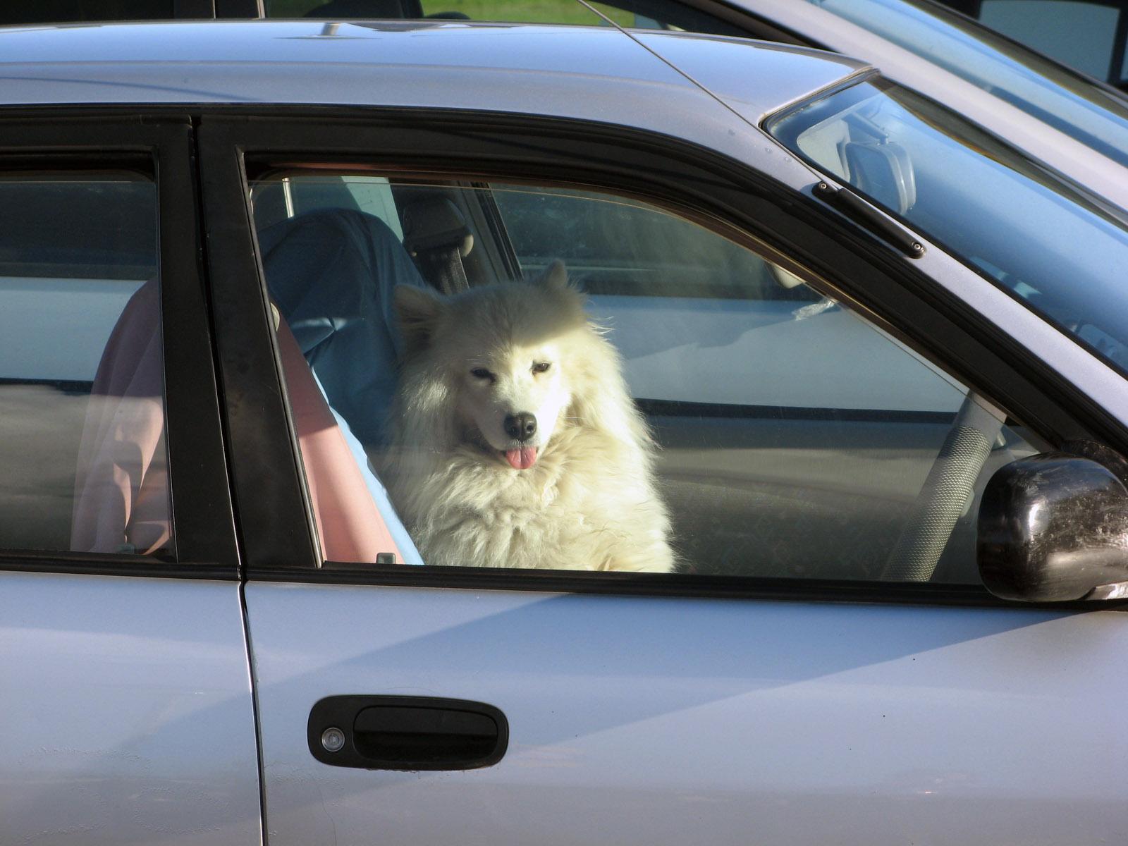 hafan za volantem