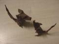 myšáci - obtížnost vhodná pro pokročilé origamisty