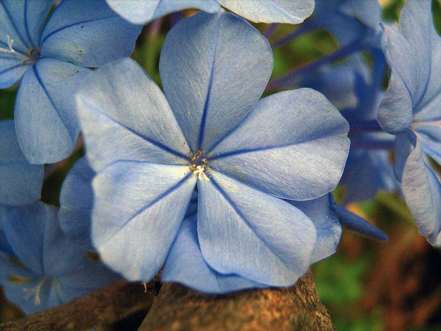 flora v Ostii