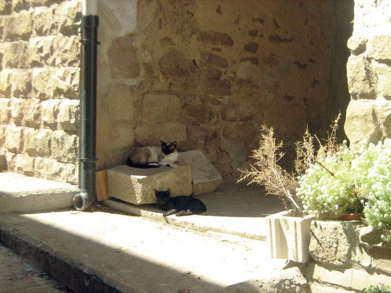 gato siesta / kočičí odpočinek