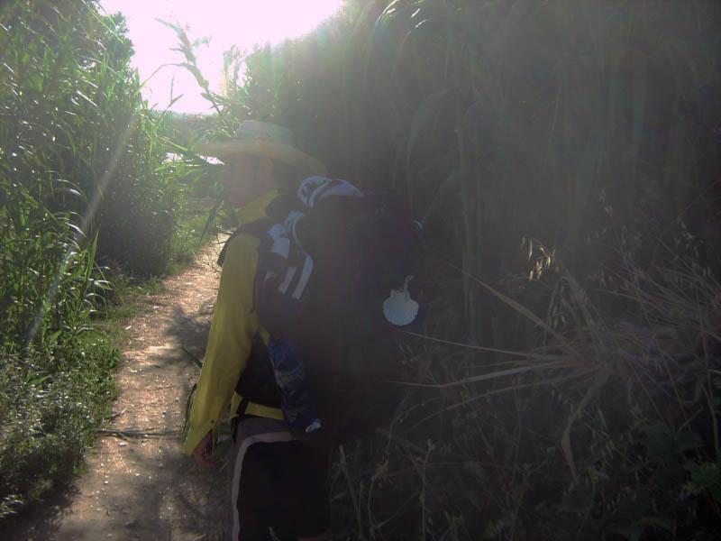 skrze bambus