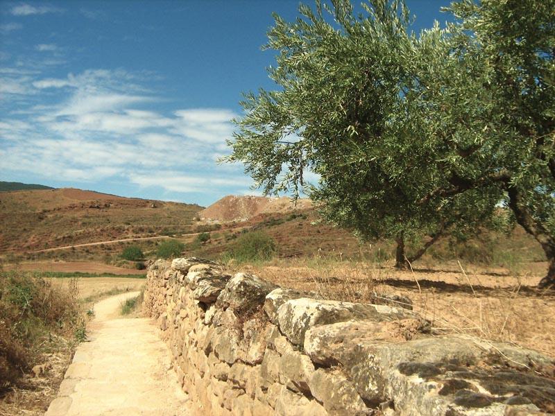 kolem olivovníků