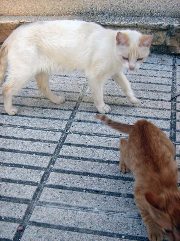 kočky Španělska