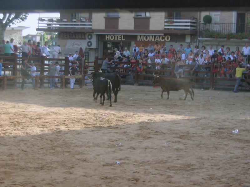 býci se vrací zpátky do ohrady
