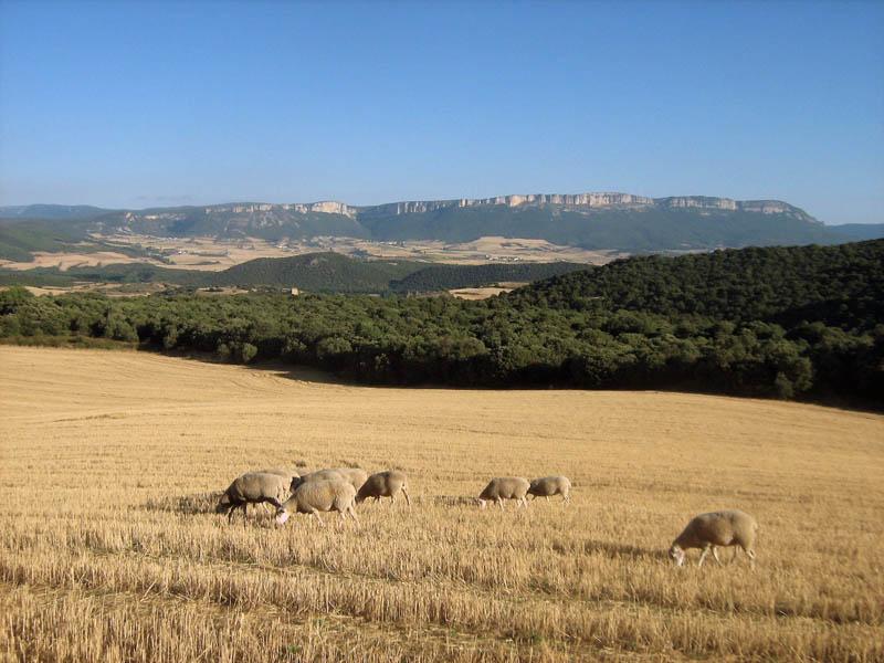 s ovečkami po ruce