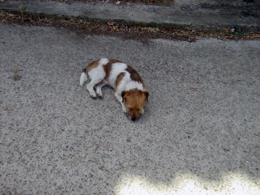 psí siesta