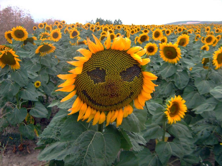 con una sonrisa