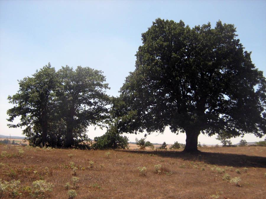stromy uprostřed krajiny